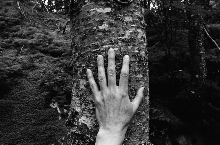 Larch, Spruce, Fir, Birch, Hand, Blast Hole Pond Road